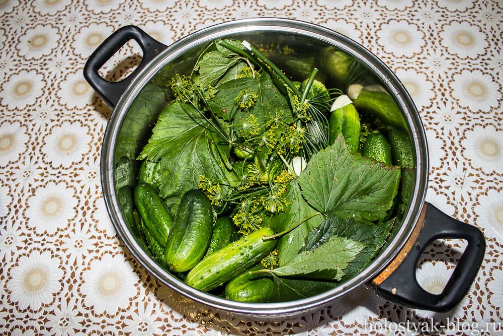 малосольные огурцы рецепт в холодной воде