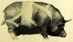 свинья в бинтах