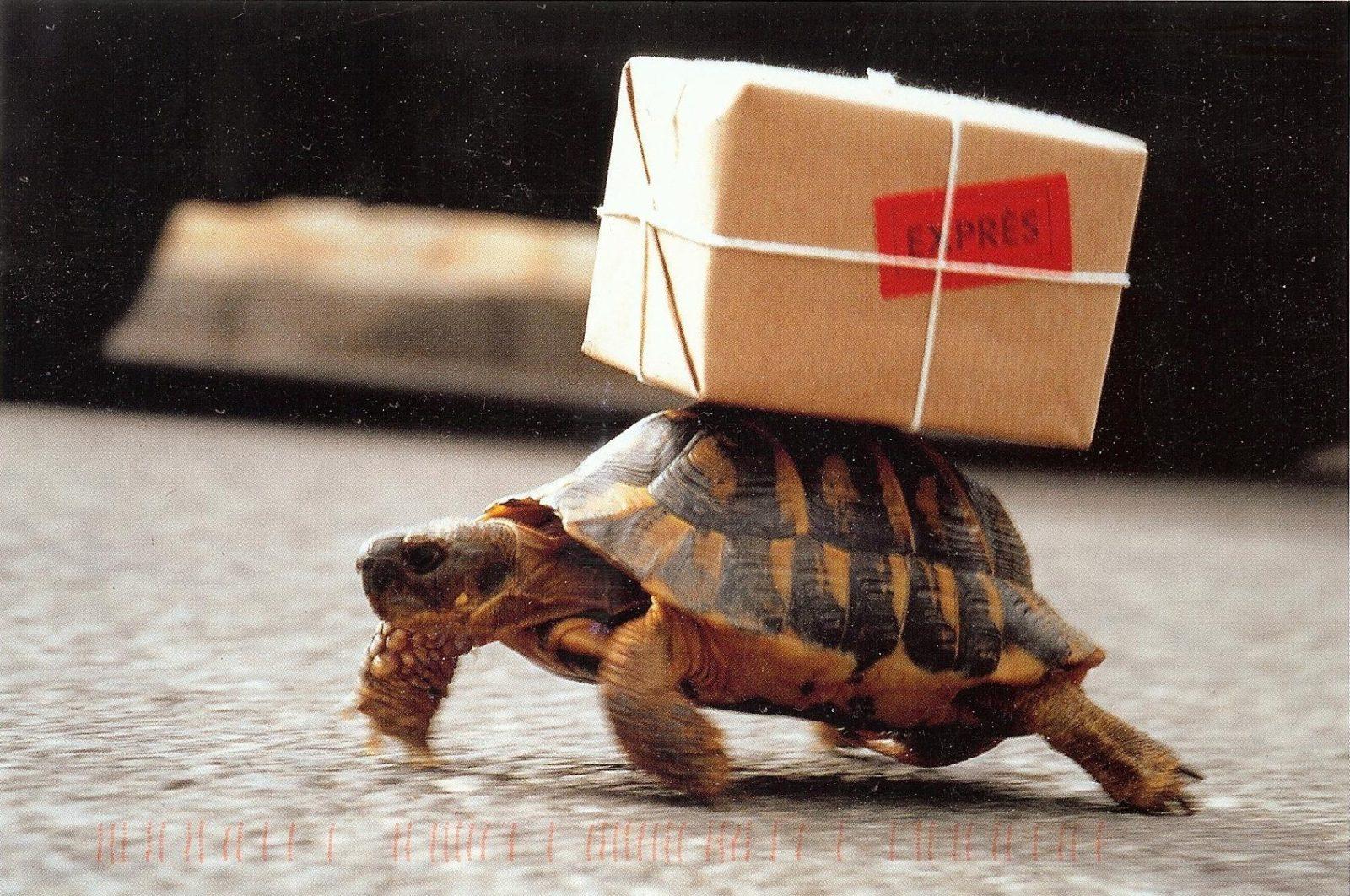 черепаха курьер